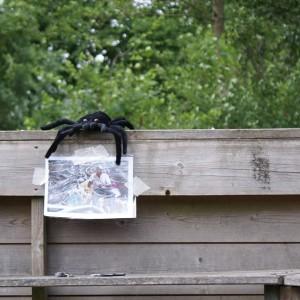 spin Anansi op onderzoek in het spelgebied Het Dorpsplein (samenleving)